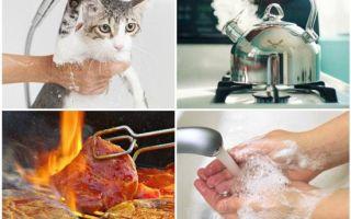 Симптомы амебиаза и основные подходы в лечении заболевания
