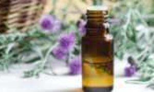 Чистотел от бородавок: полезные свойства и правила применения