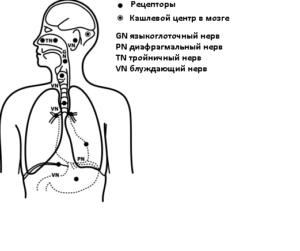 Сухой кашель долго не проходит у взрослого: как лечить пациента