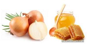 Лук с медом от кашля: польза и особенности приготовления средства