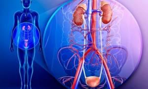 Какие патологии мочеполовой системы входят в компетенцию уролога