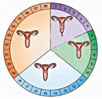 Симптомы задержки месячных и основные способы нормализации цикла