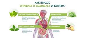 «intoxic»: средство от паразитов и для устранения их симптоматики
