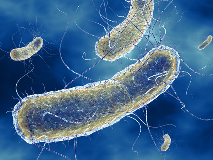 Симптомы инфицирования кишечной палочкой и лечение патологии