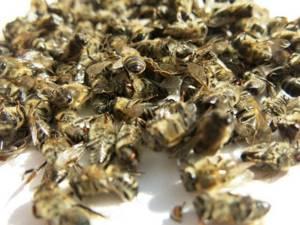 Лечение аденомы простаты пчелиным подмором: варианты терапии