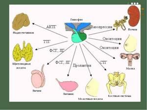 Диффузная мастопатия: форма с преобладанием фиброзного компонента