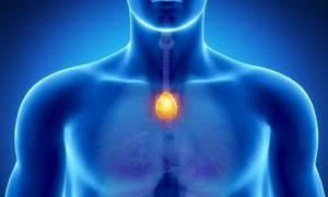 Показания к ультразвуковому исследованию вилочковой железы