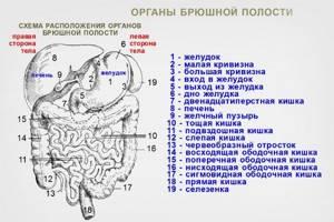 Какие особенности имеет проведение УЗИ органов брюшной полости