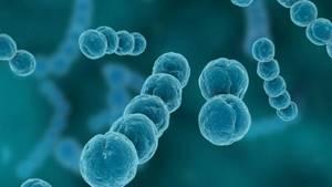 Симптомы заражения организма бета-гемолитическим стрептококком