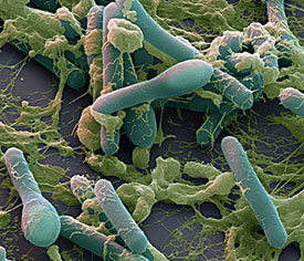 Симптомы ботулизма и методы лечения инфекционного заболевания