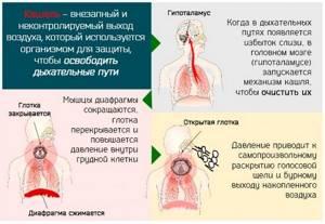 Почему появился кашель: основные факторы и частые симптомы