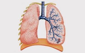 Таблетки от кашля с грудным эликсиром: особенности применения