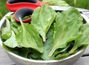Подорожник от кашля детям: рецепты на основе этого растения