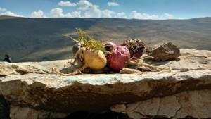 «Перуанская Мака» для улучшения эрекции: эффективность препарата