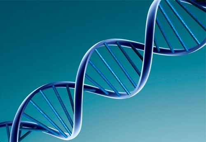 Вирусная нагрузка ВПЧ: этапы проведения и нормативные значения