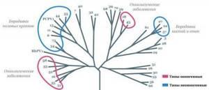 Папилломы генитальные: признаки появления и методы лечения
