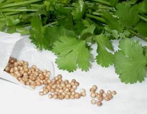 Семена петрушки от простатита: популярные способы применения