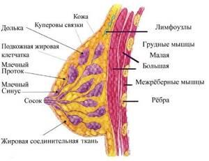 Противозачаточные при мастопатии: механизм действия и эффект