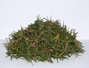 Багульник от кашля: эффективное народное средство для отхаркивания