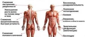 Простата: что это такое и ее основные функции и патологии