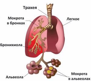 Мукалтин от какого кашля